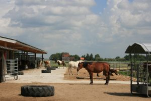 Bucking-Horse-Stable