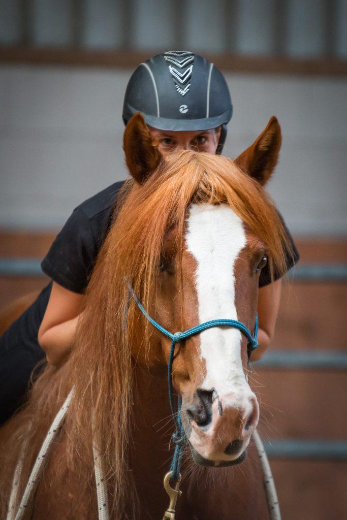 My Gentle Willow - Mustang Makeover Germany - Neele Kühl Open-Minded Horsemanship - Westernreiten in Norddeutschland - https://www.instagram.com/meike.stahl/