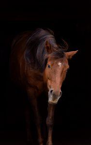 Hi Mo Docs Amy - Neele Kühl Open-Minded Horsemanship - Positive Verstärkung im Pferdetraining - Norddeutschland - Foto: https://www.instagram.com/anna_cathari_1606/